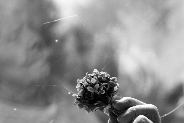 Kytička fialek, stará žena, babička, ruka
