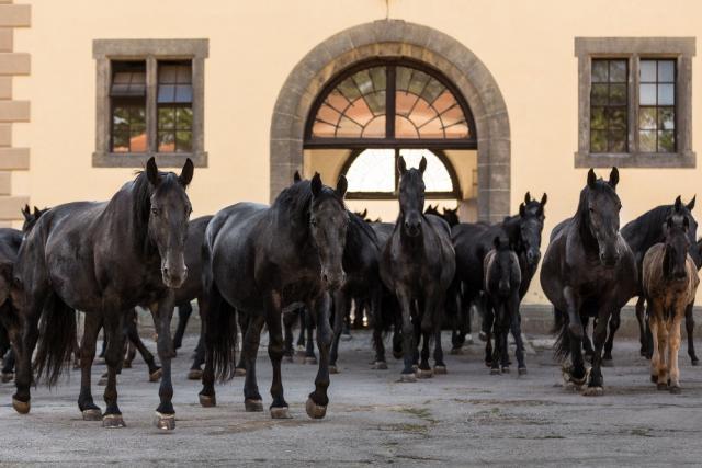 Národní hřebčín Kladruby nad Labem - Den koní - Slatiňany