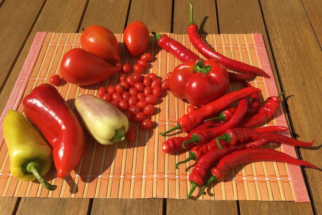 Zajímavé odrůdy paprika a rajčat - Dívčí prso  (vledo nahoře),  paprika Ostry  (zelená vledo dole),  Slovakia  (červená vlevo),  paprika Tamina  (placatá vpravo) | foto: František Hlubocký