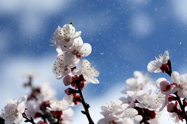 Jaro, květ, strom, příroda (ilustrační foto)