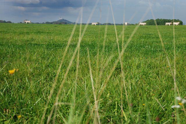 Pastviny pod Kunětickou horou