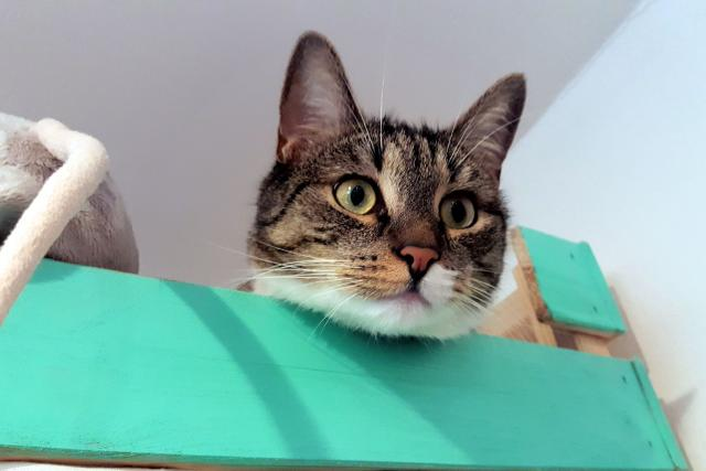 Kočka se ráda schová do krabice nebo do bedničky