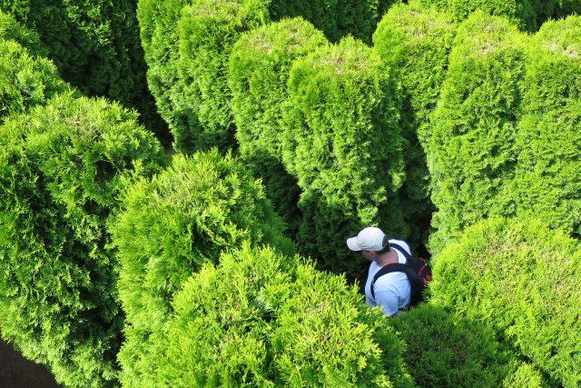 Přírodní labyrint v Nových Hradech tvoří 750 tújí typu smaragd