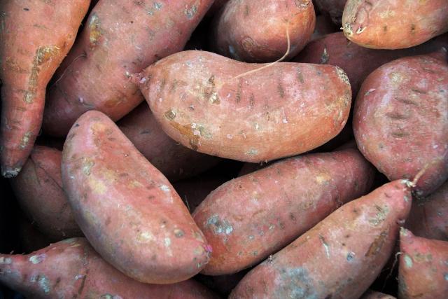 Sladké brambory si můžete vypěstovat i doma v květináči