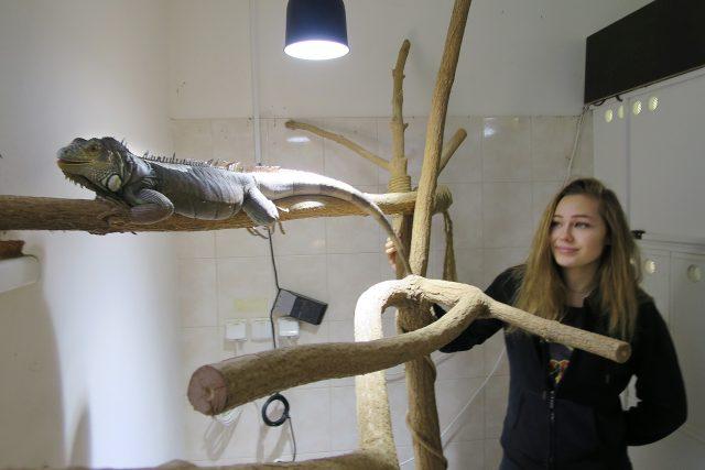 Studentka třetího ročníku oboru Chovatel cizokrajných zvířat Eva Kučerová v učebně teraristiky