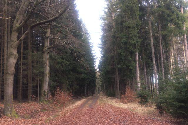 Přes hluboké lesy u Proseče sice vedou cesty, přesto se tam dá zabloudit a podle pověsti potkat třeba divoženku