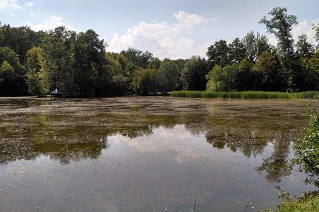 Rybník v zámeckém parku v Heřmanově Městci