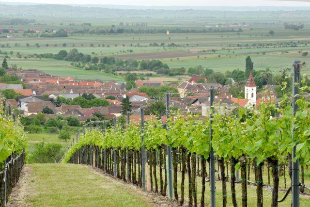 Vinný sklípek na jižní Moravě  (ilustrační foto) | foto: Profimedia