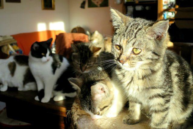Obývací pokoj Tauberových mají kočky nejraději