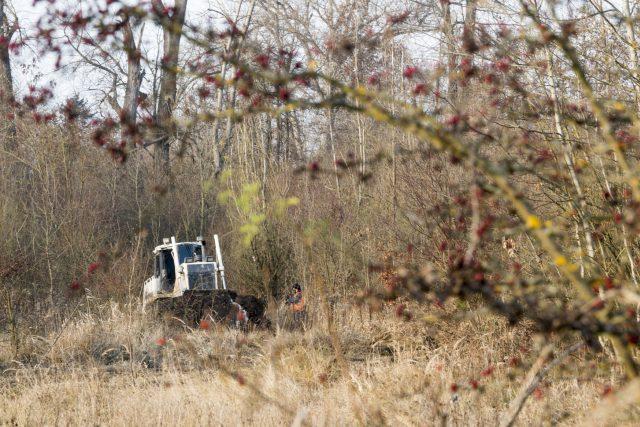 Buldozer pomáhá při obnově mokřadů v pardubické lokalitě Červeňák