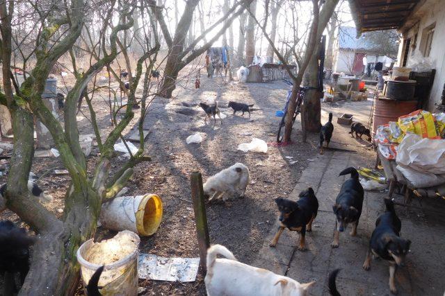 Veterináři v Přestavlkách zabavili majiteli 39 psů | foto: Státní veterinární správa