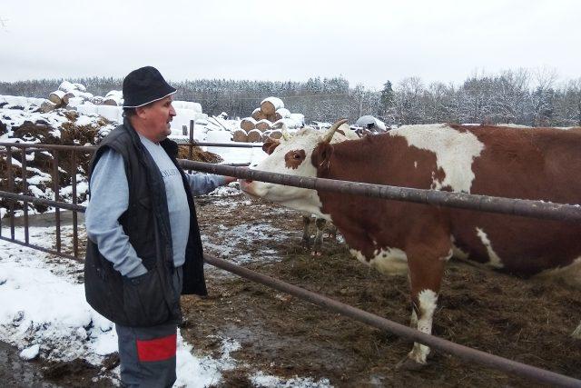 Rodina Podstavkových chová na mléko tři desítky dojnic | foto: Jiří Fremuth,  Český rozhlas