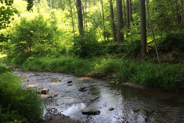Voda je v Moravské Sázavě, zvláště v jejích horních částech, tak čistá, že se někteří lidé nebojí přímo z řeky i pít